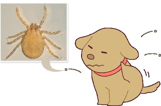 マダニ 犬バベシア症
