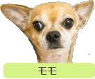 モモ 犬 ペット