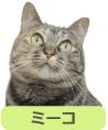 猫 ペット ミーコ